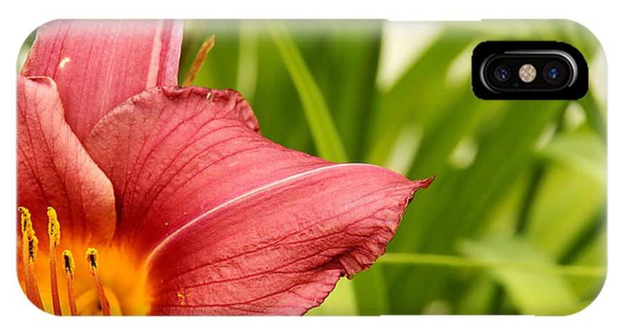 Flower IPhone X Case featuring the photograph Flower Lily Background by Sylvie Bouchard