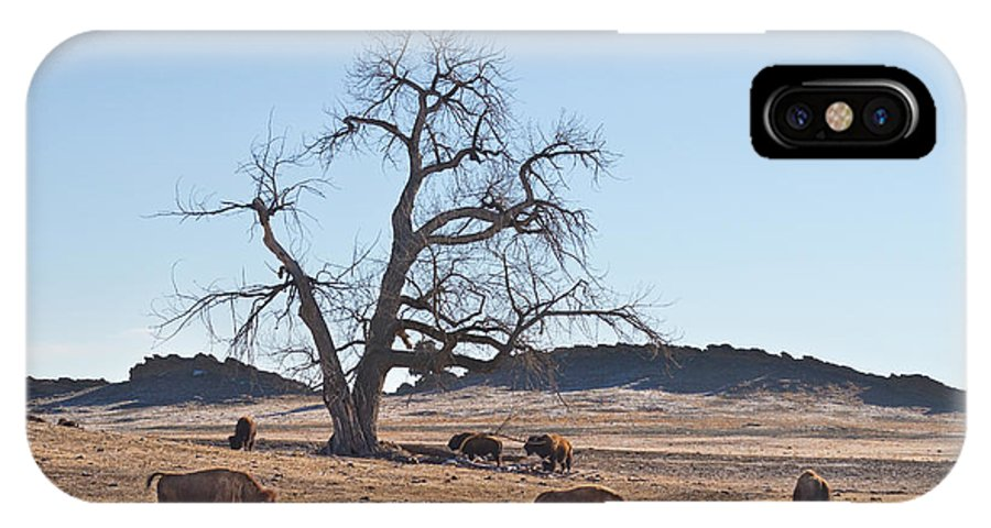 Buffalo IPhone X Case featuring the photograph Give Me A Home Where The Buffalo Roam by James BO Insogna