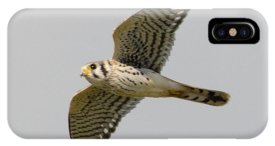 Falcon IPhone X Case featuring the photograph Glide by Judd Nathan