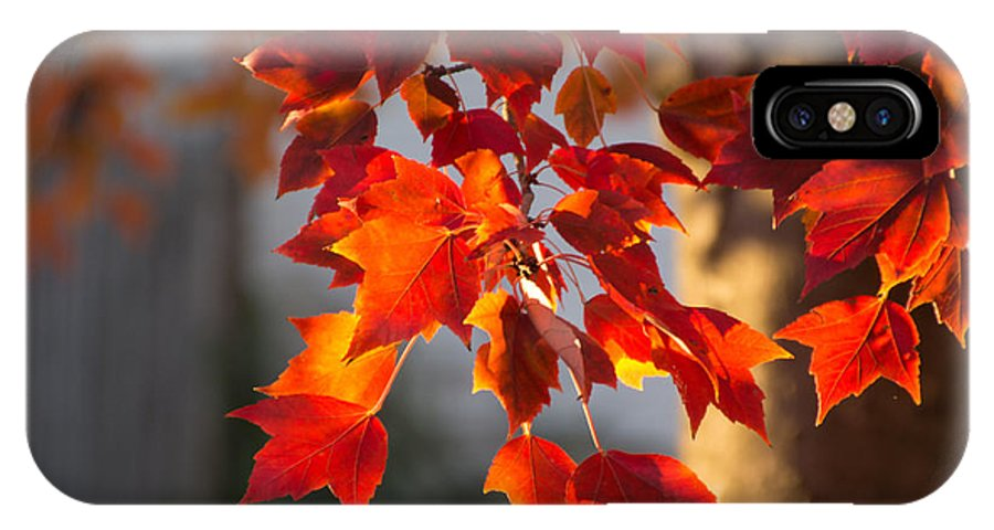 Autumn Leaves IPhone X Case featuring the photograph Golden Hour by Cathy Donohoue