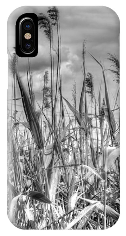 Monochrome IPhone X Case featuring the photograph Grasses In Motion by Stephen Barrie