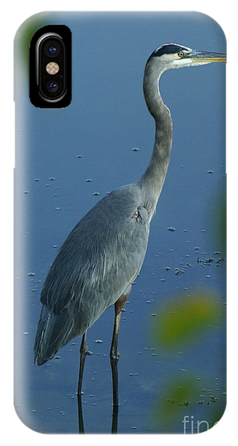 Great IPhone X Case featuring the photograph Great Blue Heron I by Butch Lombardi