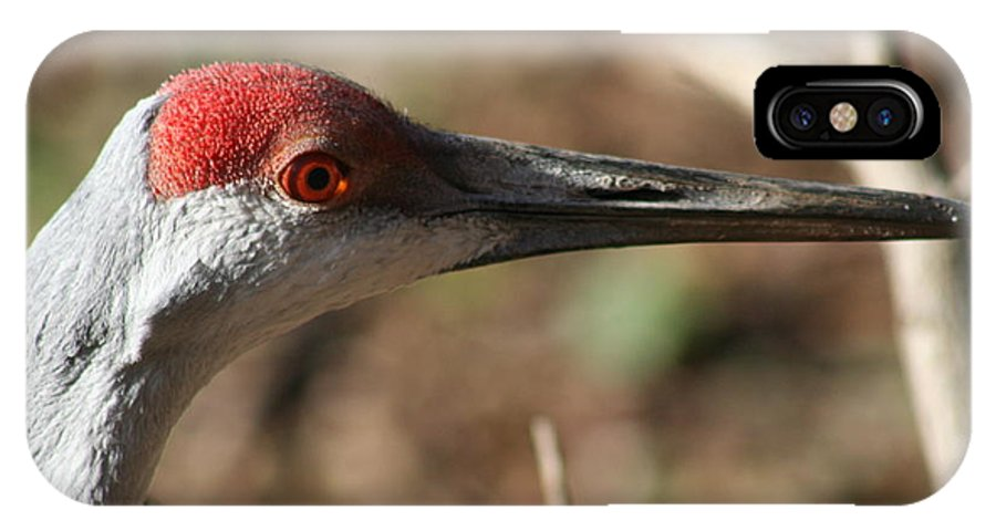 Sandhill IPhone X Case featuring the photograph Greater Sandhill Crane by Roger Look