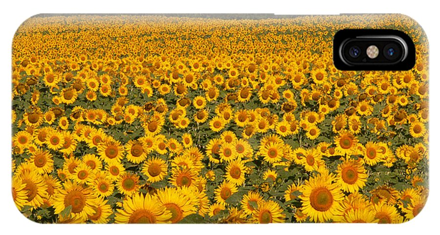 Sunflower Field IPhone X Case featuring the photograph Here comes the sun by David Bearden