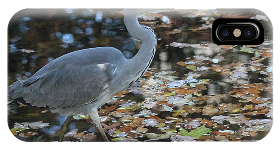 Herons IPhone X Case featuring the photograph Heron On The River by Four Hands Art