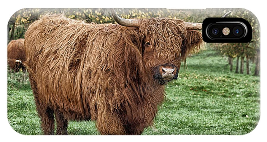 Highland Cattle Cow IPhone X Case featuring the photograph Highland Cow by Brothers Beerens