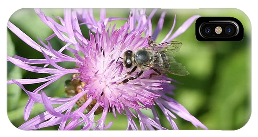 Honeybee IPhone X Case featuring the photograph Honeybee On Ironweed by Lucinda VanVleck