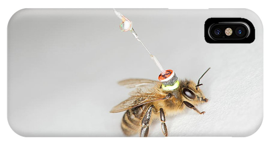 Honeybee IPhone X Case featuring the photograph Honeybee Radar Tagging by Louise Murray