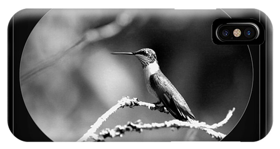 Hummingbird IPhone X Case featuring the photograph Hummingbird by Travis Truelove