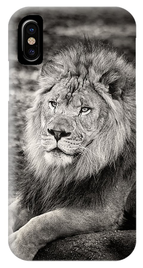 Lion IPhone X Case featuring the photograph It Is Good To Be King by Michael Pachis