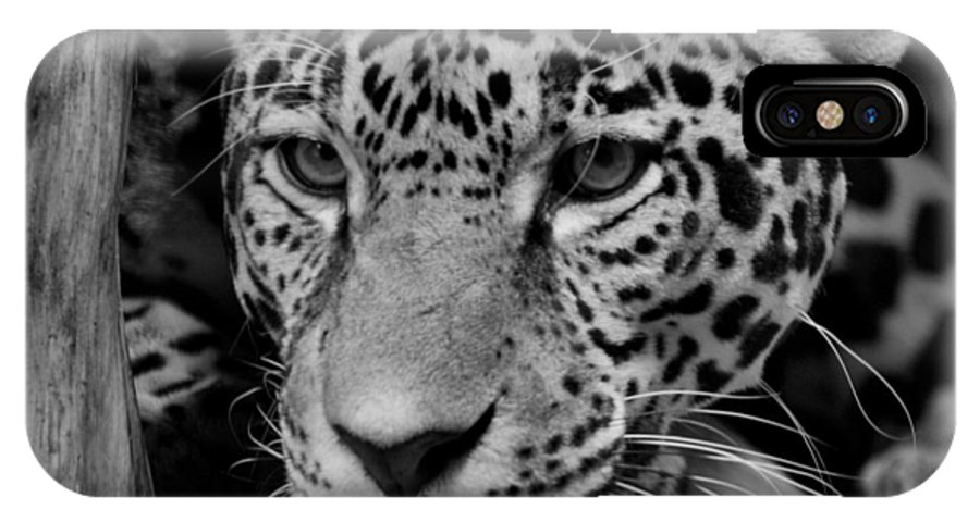 Jaguar IPhone X Case featuring the photograph Jaguar In Black And White II by Sandy Keeton