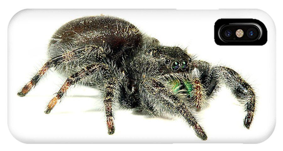Spider IPhone X Case featuring the photograph Jumping Spider by Paul Fell