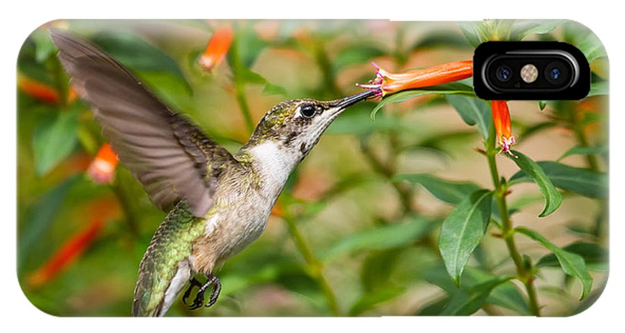 Ruby-throated Hummingbird IPhone X Case featuring the photograph Juvenile Male Ruby-throated Hummingbird by Dawna Moore Photography