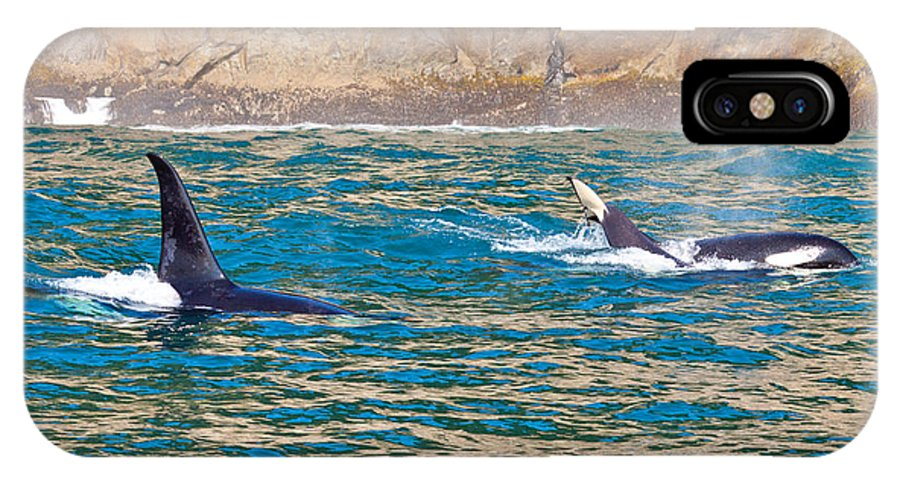 IPhone X Case featuring the photograph Killer Whale by Richard Jack-James