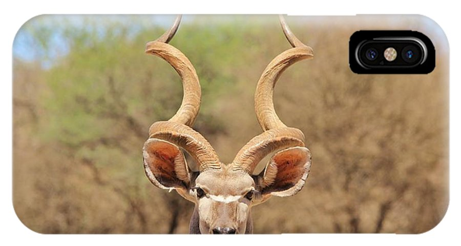 Africa IPhone X Case featuring the photograph Kudu Bull Spiral by Hermanus A Alberts