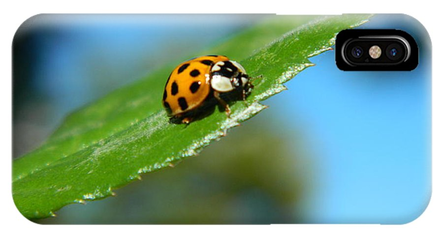 Lady IPhone X Case featuring the photograph Lady Bug by Nicki Bennett