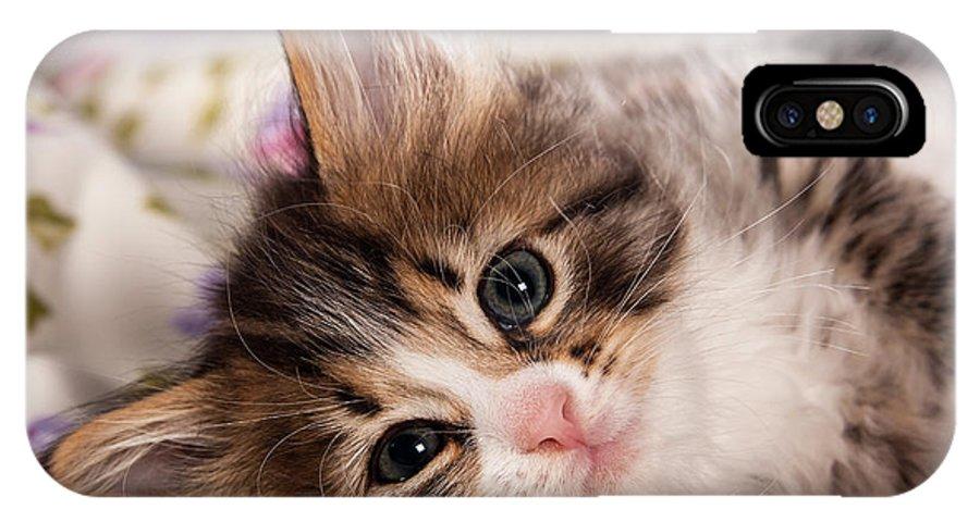 Cat IPhone X Case featuring the photograph Little Cat Kitten by Doreen Zorn