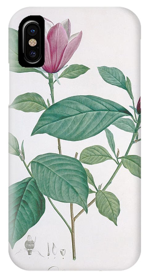 Redoute IPhone X Case featuring the drawing Magnolia Discolor, Engraved By Legrand by Henri Joseph Redoute