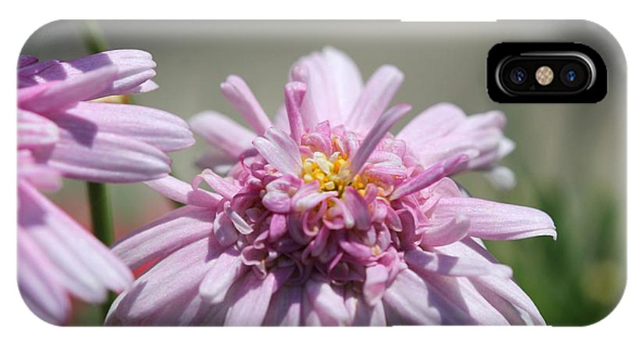 Mccombie IPhone X Case featuring the photograph Marguerite Daisy Named Double Pink by J McCombie