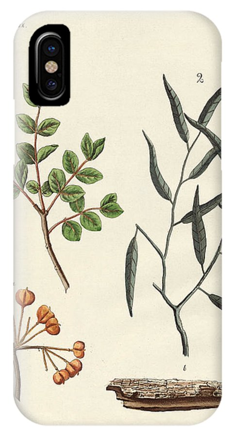 Guajacum IPhone X Case featuring the drawing Medicinal Plants by Splendid Art Prints