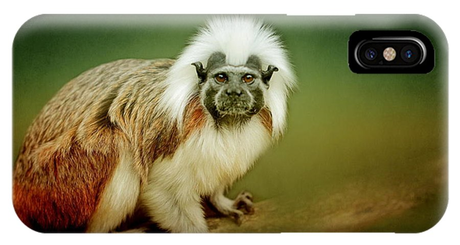 Animal IPhone X Case featuring the photograph Monkey by Heike Hultsch