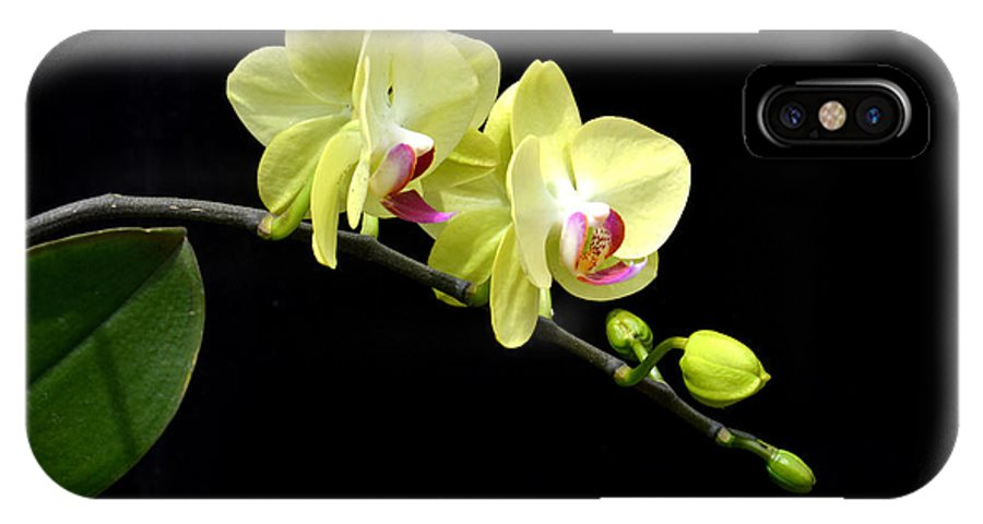 Flower IPhone X Case featuring the photograph Moon's Orchid by Antoni Halim
