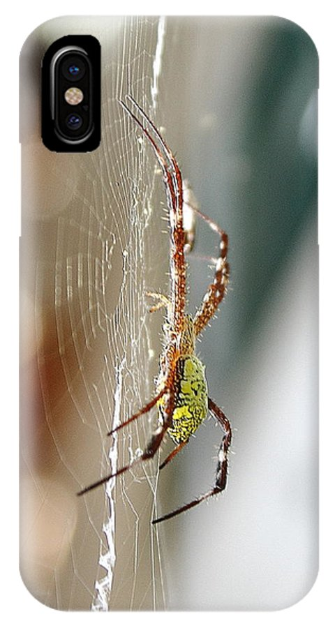 Spider IPhone X Case featuring the photograph Morning Web by Chandra Nur