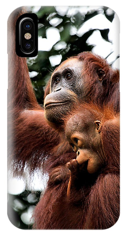 Orangutan IPhone X Case featuring the photograph Mother And Baby Orangutan Borneo by Carole-Anne Fooks