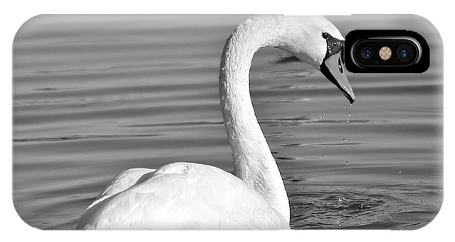 Monochrome IPhone X Case featuring the photograph Mute Swan by Carol Bradley