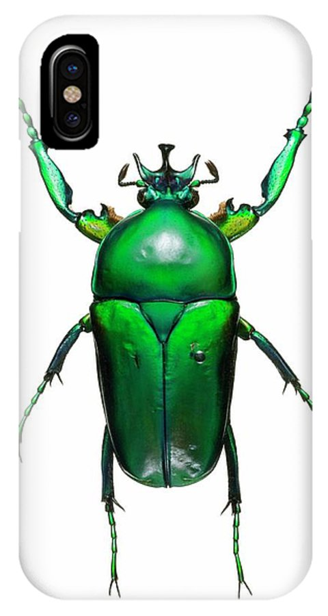 Neptunides Stanleyi IPhone X Case featuring the photograph Neptunides Flower Beetle by Lawrence Lawry