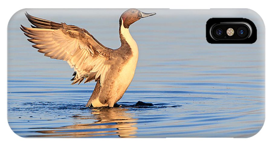 Duck IPhone X Case featuring the photograph Northern Pintail by Leslie Morris