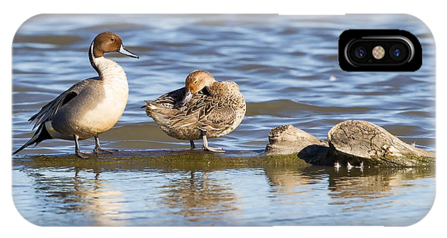 Northern Pintail IPhone X Case featuring the photograph Northern Pintail Pair by Leslie Morris