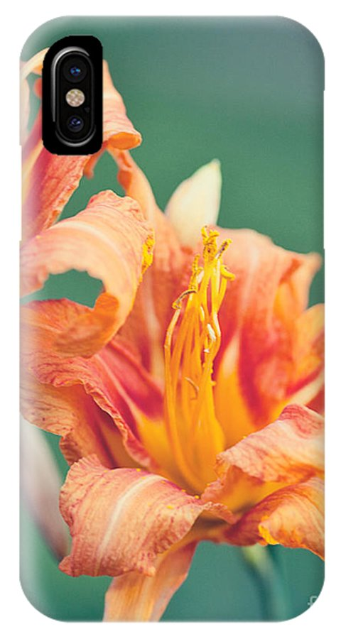 Orange Decor IPhone X Case featuring the photograph Orange Double Daylily by Erin Johnson
