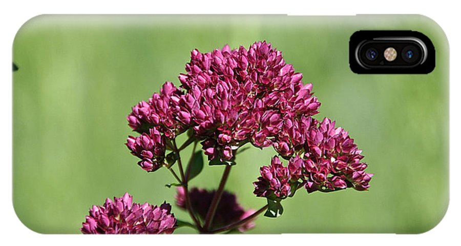 Flower IPhone X Case featuring the photograph Oregano by Susan Herber