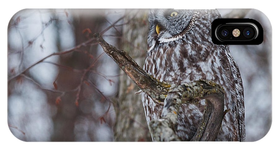 Owls IPhone X Case featuring the photograph Over There by Cheryl Baxter