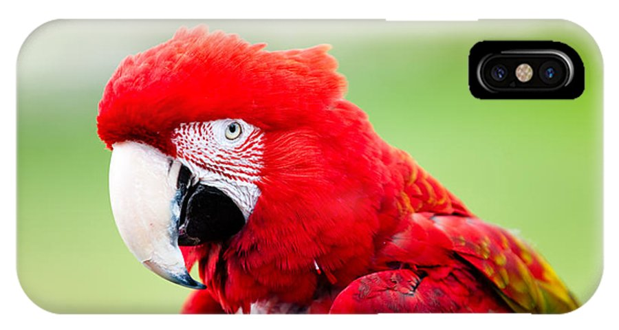 Parrot IPhone X Case featuring the photograph Parrot by Sebastian Musial