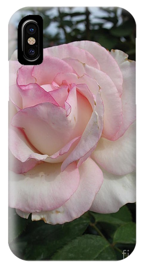Roses IPhone X Case featuring the photograph Pastel Rose by Christiane Schulze Art And Photography