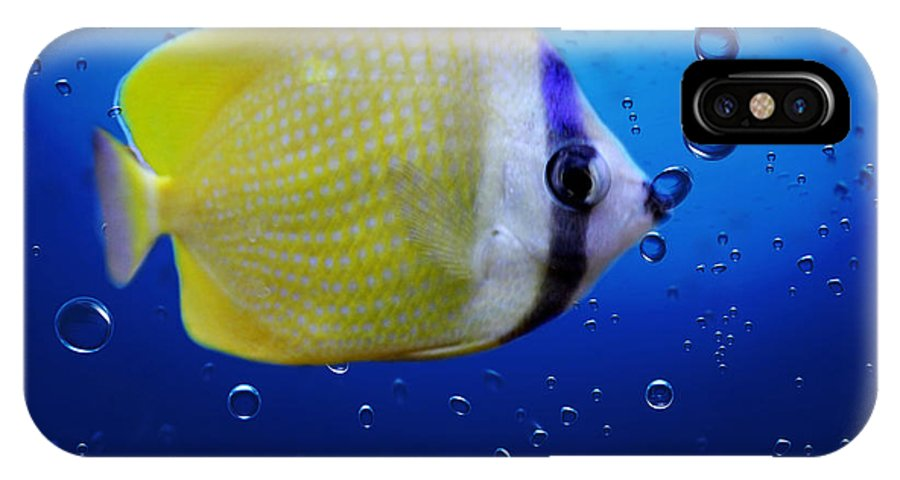 Fish IPhone X Case featuring the photograph Perch by Heike Hultsch