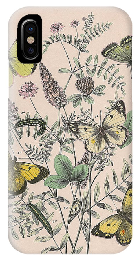 Butterfly IPhone X Case featuring the drawing Pieridae by W Kirby