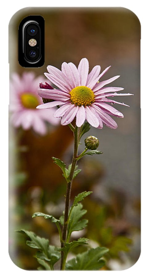 Pink Daisies Photographs IPhone X Case featuring the photograph Pink Daisies by Dennis Coates