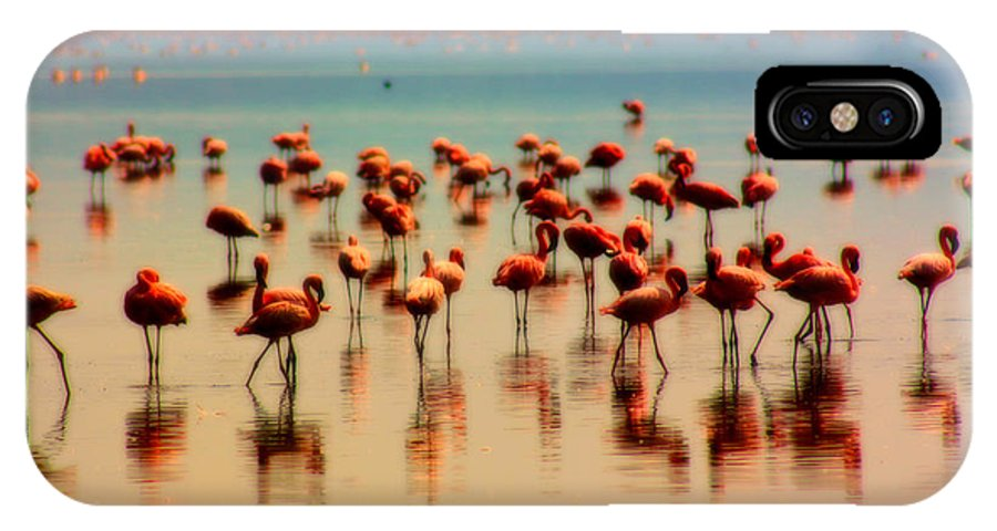 Flamingo IPhone X Case featuring the photograph Pink Famingo by Amanda Stadther