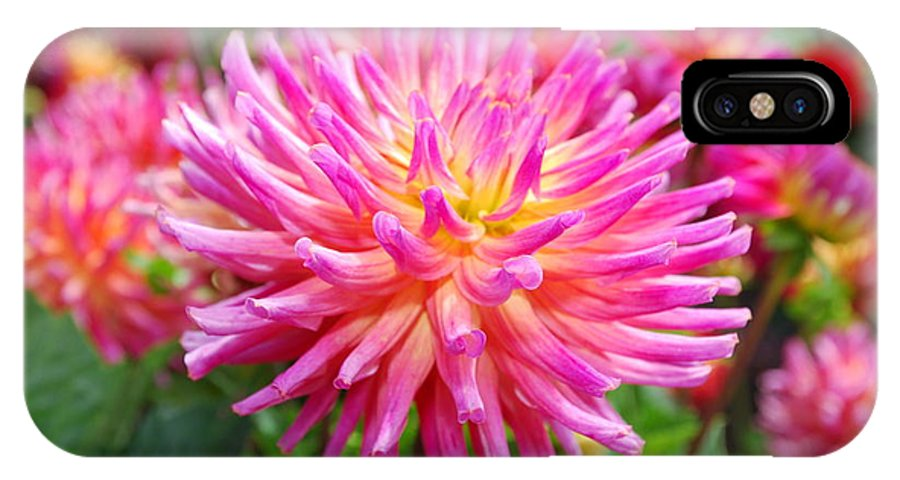 Pink IPhone X Case featuring the photograph Pink Flower by Bradley Bennett