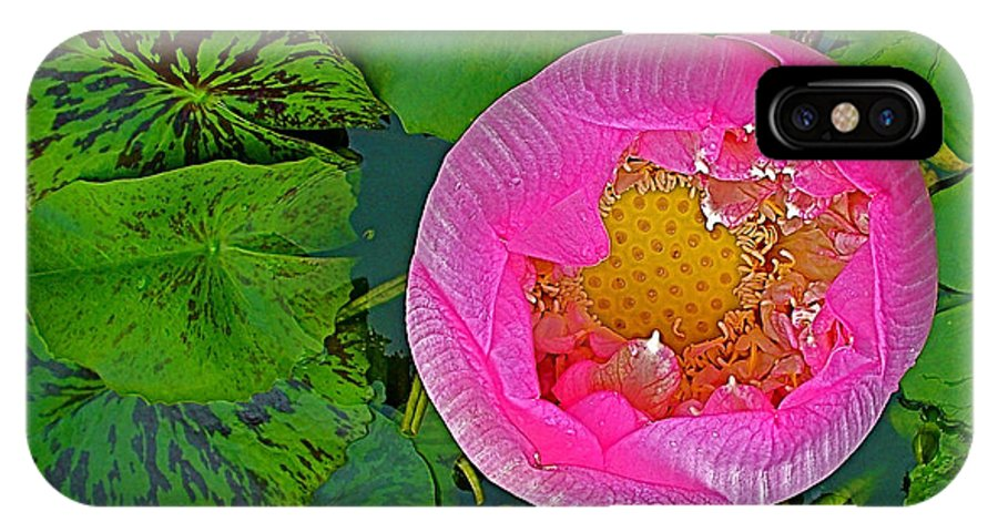 Pink Lotus In Backyard Of Home In Bangkok IPhone X / XS Case featuring the photograph Pink Lotus In Backyard Of Home In Bangkok-thailand. by Ruth Hager
