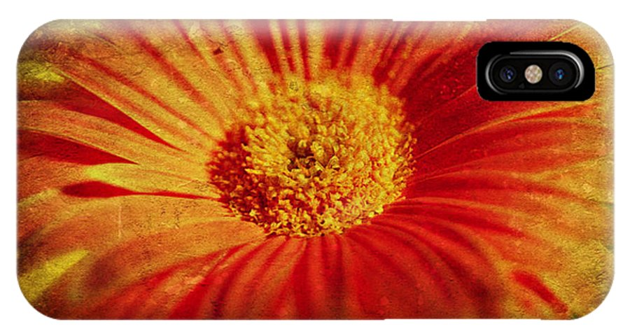 Flower IPhone X Case featuring the photograph Plastered Petals by Jessica Grandall