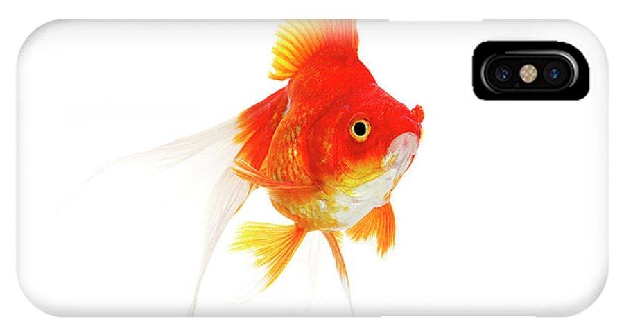 Adult IPhone X Case featuring the photograph Poisson Rouge Queue De Voile Carassius by Gerard Lacz