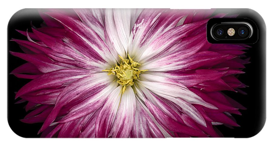 Dahlia IPhone X / XS Case featuring the photograph Red And White Dahlia by Oscar Gutierrez