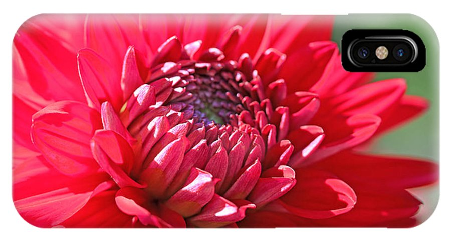 Dahlia IPhone X Case featuring the photograph Red Dahlia Flower by Jennie Marie Schell