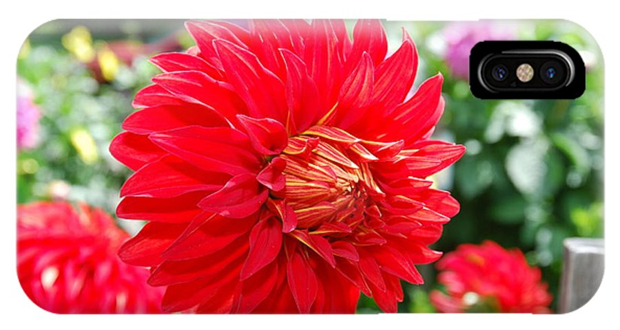 Red IPhone X Case featuring the photograph Red Flower by Bradley Bennett