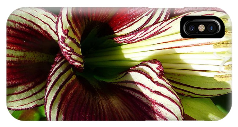 Lily IPhone X Case featuring the photograph Red Striped Lily by Jeff Lowe