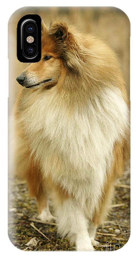 Rough Collie IPhone X / XS Case featuring the photograph Rough Collie Dog by Jean-Michel Labat
